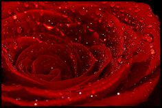 Photo Tips Public Domain Red Roses Tips Photography Tips