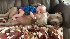 Nurturing bully lover her tiny human