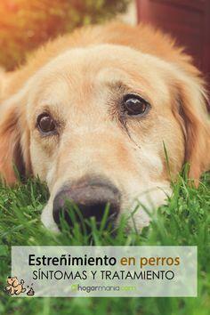 570 Ideas De Mascotas En 2021 Mascotas Perros Animales