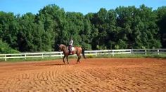 """""""The canter. Who says you can't teach and old dog/horse new tricks? Check out the changes in Darrien, a 17 year old FEI dressage horse"""" What have you learned from watching this series? Is it making a difference with what you are doing with your horse?"""