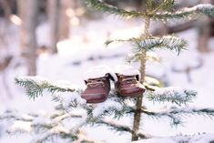 Pregnancy Announcement Pictures, Pregnancy Announcement Photos, Pregnancy Reveal Photos, Christmas Pregnancy Photos, Winter Maternity Pictures, Photo Couple, Winter Snow, Baby In Snow, Early Pregnancy