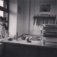 Meet Jack! Charity, Meet, Dog, Painting, Diy Dog, Painting Art, Doggies, Paintings, Painted Canvas
