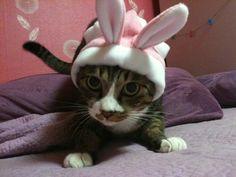 Rabbit Paul