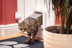 Katzenklappe Test 2018 • Die 10 besten Katzenklappen im Vergleich
