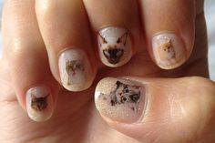 OMG. Kitten Nails. LOLZ