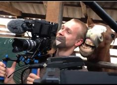 A cheeky horse does tests a camera operator's devotion to his job.