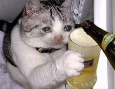 Cat crying - CATS t i e r n o s - # crying - Cat crying – CATS t i e r n o s – # shared # crying - Animal Jokes, Funny Animal Memes, Cute Funny Animals, Cute Baby Animals, Cute Cats, Funny Cats, Funny Memes, Top Memes, Sad Cat Meme