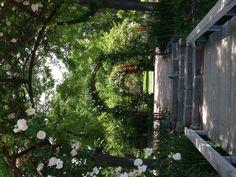 Idaho Botanical Gardens-rose covered arches