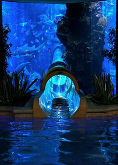 Taking your sliding experience to the next level. Indoor aquarium + an indoor slide!