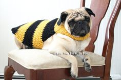Dog Sweater  Bumble Bee Jacket  Made to by AllYouNeedIsPugShop, $38.00
