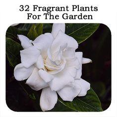 30 Fragrant Plants For The Garden