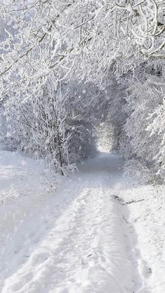 Winter wonderland | ****LUNA ****. #whitesnow