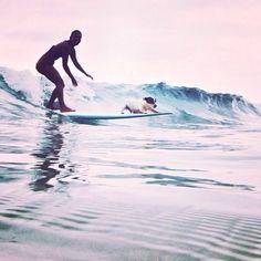 saltwater-heartt:  Surf puppy!!
