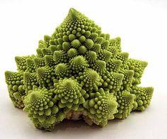 Google Image Result for http://2.bp.blogspot.com/-hzWvk3AYkcg/TzWJrafa_tI/AAAAAAAAi3w/pGLiv4ykWbM/s1600/romanesco-cauliflower.jpg