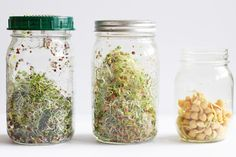 How to Grow Your Own Sprouts in 5 Simple Steps