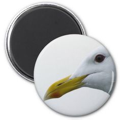Friendly Seagull? Refrigerator Magnets by Florals by Fred #zazzle #gift #photogift
