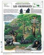 Affiche pédagogique deyrolles.#janegoodall#princejardinier#chimpanzé