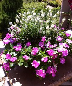 Not sure what the white plants are but the pink ones are periwinkles!