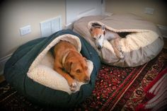 cutedogssleeping:  Felix and Claire December 12 2013