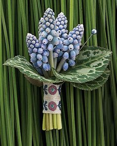 Muscari Boutonniere.. interesting. never seen/heard of this flower (plant?) before..