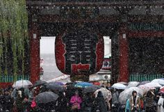 Cae nieve en Tokio en noviembre, lo nunca visto en 54 años (fotos) - http://www.notiexpresscolor.com/2016/11/24/cae-nieve-en-tokio-en-noviembre-lo-nunca-visto-en-54-anos-fotos/