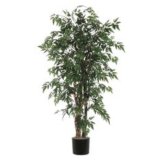 Vickerman TEX0670-07 Ming Aralia Executive Tree, 7' -- Click on the image for additional details.