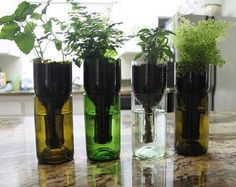Recycled Wine Bottle Self Watering Planter by BargainsGaloreMore