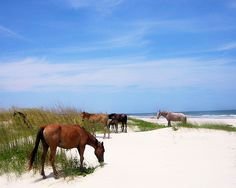 Just booked my camping trip to Cumberland Island. There are wild ponies & the beach & ruins to hike to & WILD PONIES. So excited!