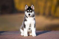 El uso del vinagre de manzana para nuestras mascotas Cpr For Dogs, How To Grow Taller, Homemade Dog Food, Dory, Animals And Pets, Dog Food Recipes, Husky, Pitbulls, Pet Care