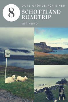 Hast du schon mal über einen Roadtrip mit Hund im Van nach Schottland - eins der schönsten Reiseziele in Europa - nachgedacht? Das schöne Fleckchen im Norden von Großbritannien bietet perfekte Bedingungen für richtiges Vanlife und für traumhafte Touren mit dem Wohnmobil, einsame Stellplätze und außergewöhnliche Voraussetzungen zum Wandern und Camping mit Hund. Zudem gibts hier die mitunter schönsten Strände Europas. Neugierig? Lies rein warum Schottland zu meinen Top Destinationen gehört. Roadtrip, Scotland, Traveling, Movie Posters, Movies, European Travel, Viajes, Films, Film Poster