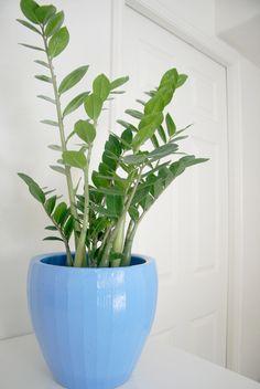 98 Best Indoor Green Plants Images Plants House Plants