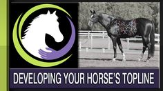 Developing Your Horse's Topline (the Role of Nutrition)