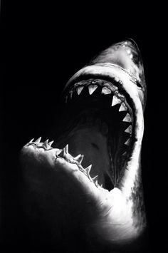 Robert Longo. Untitled (Shark 7). Charcoal mounted on paper