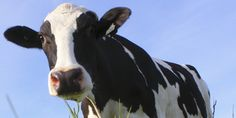 Revealing The Udder Truth about Dairy