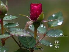 C'è qualcosa di bello nell'aria.   #enelixir #justbreath #cequalcosadibellonellaria #gbhair #staytuned #coomingsoon #feelinggood #frescacomeunarosa  www.enelixir.com