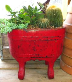 Red Wooden Planter Cactus/Succulent - All About Gardens Water Plants, Garden Plants, House Plants, Potted Plants, Wooden Planters, Wooden Garden, Growing Succulents, Cacti And Succulents, Flower Structure