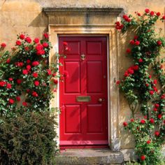 Red door, red climbing rose (For booklet?)