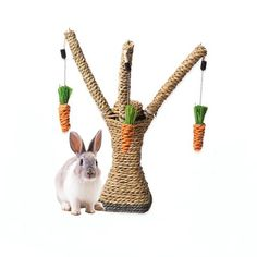 For rabbits - for sale rabbit run rabbit toys rabbit names rab – ShopBunnies! Rabbit Eating, Rabbit Run, House Rabbit, Rabbit Toys, Bunny Toys, Pet Rabbit, Bunnies, Rabbit Litter, Bunny Supplies