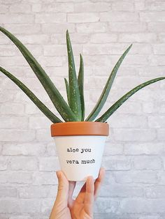 Give your plants a home that they (& you) will love! This lovely hand painted terracotta planter is made to proudly display beautiful succulents, cacti and herbs in your home. They make an adorable addition to any room in your home, studio, business or of Small Succulents, Planting Succulents, Planting Flowers, Succulent Display, Succulent Gifts, Succulent Arrangements, Succulent Outdoor, Outdoor Pots, Succulent Planters