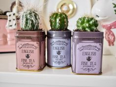 Planting succulents in old tea tins
