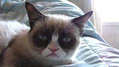 Sleepy Grumpy Cat