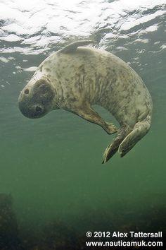 ˚Banana Seal