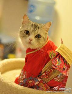 Kitty Geisha