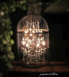 Bird cage lighting