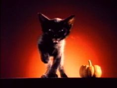 Read more: https://www.luerzersarchive.com/en/classic-spot-of-the-week/2014-44.html Howl-O-Ween This 1995 ad for Pet Food Warehouse features a cat that doesn't quite make the sound you expected it to. Tags: Kruskopf Olsen, Minneapolis,Sue Kruskopf,Jarl Olsen,Dublin Productions, Minneapolis,Pet Warehouse