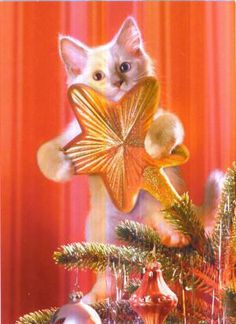 Christmas tree topper.  For more Christmas cats, visit https://www.facebook.com/funholidaycats