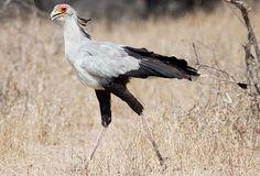 Masai Mara birds