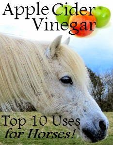 Apple Cider Vinegar (ACV) for Horses - Top 10 Uses | Savvy Horsewoman