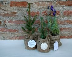 plant a tree wedding day plant favors # baptism favors#wedding favors http://www.dreamgardens.ro/plante-marturii/