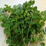 PIMPERNEL een vergeten kruid Parsley, Herbs, Fruit, Food, Essen, Herb, Meals, Yemek, Eten